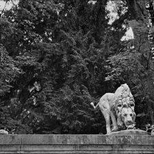 Lion, Jardin Des Plants